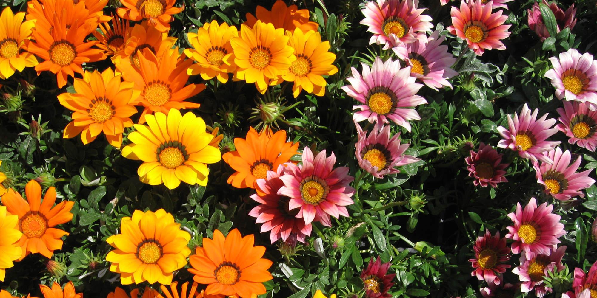 midi-oliven-flower-red Kopie.jpg