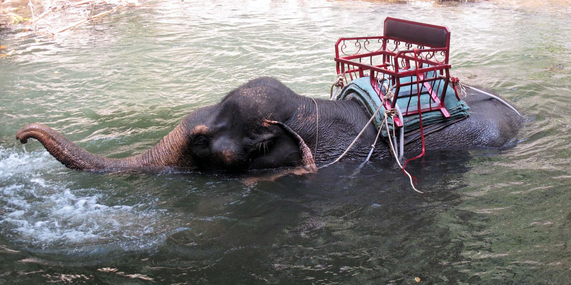 elefant-2.jpg.jpg