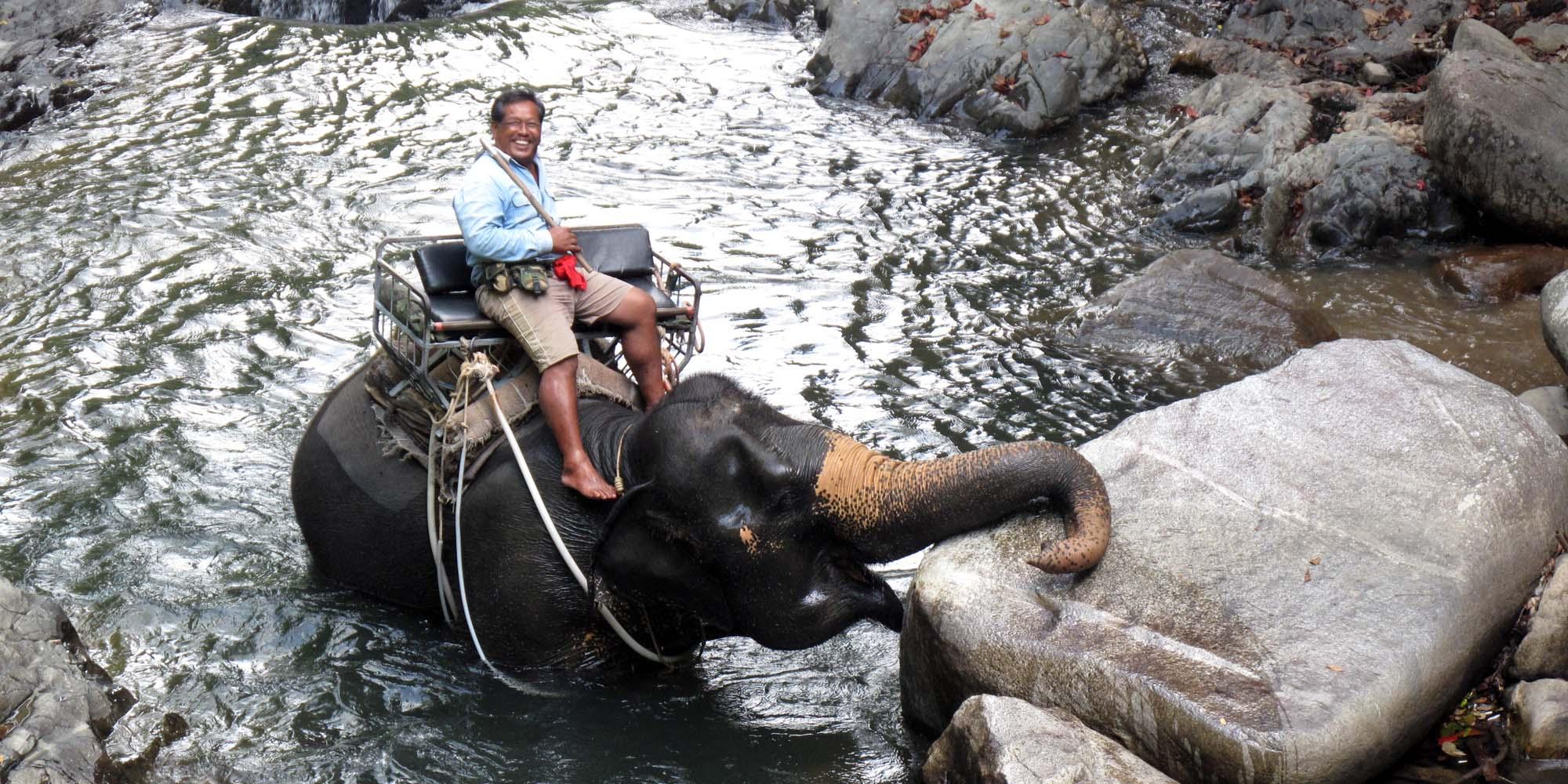 elefant-7.jpg.jpg