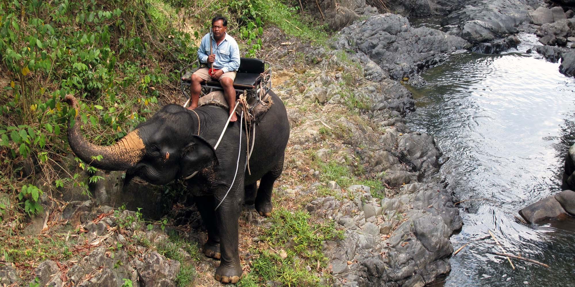 elefant-8.jpg.jpg