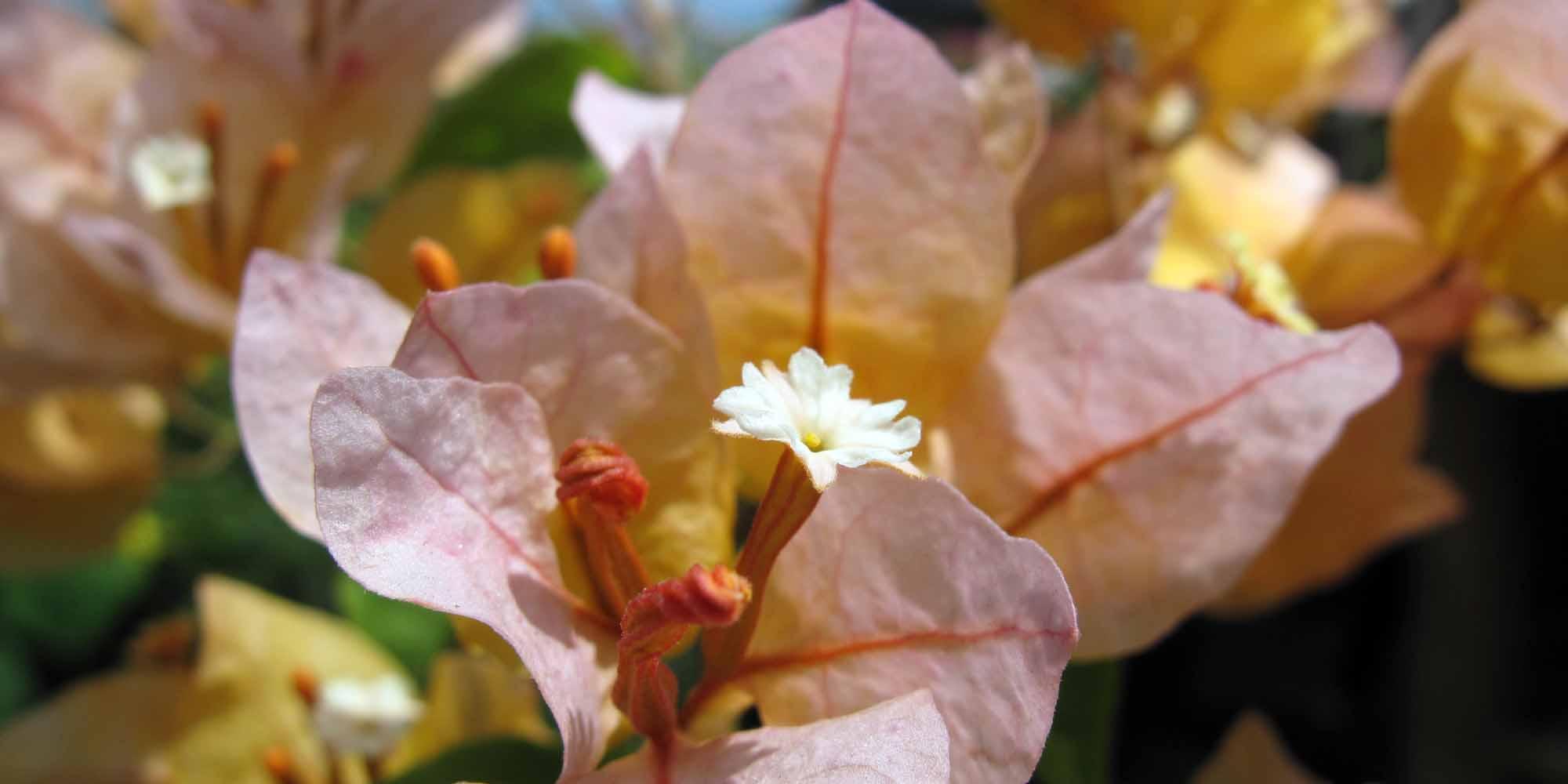 phuket-2010-flower.jpg