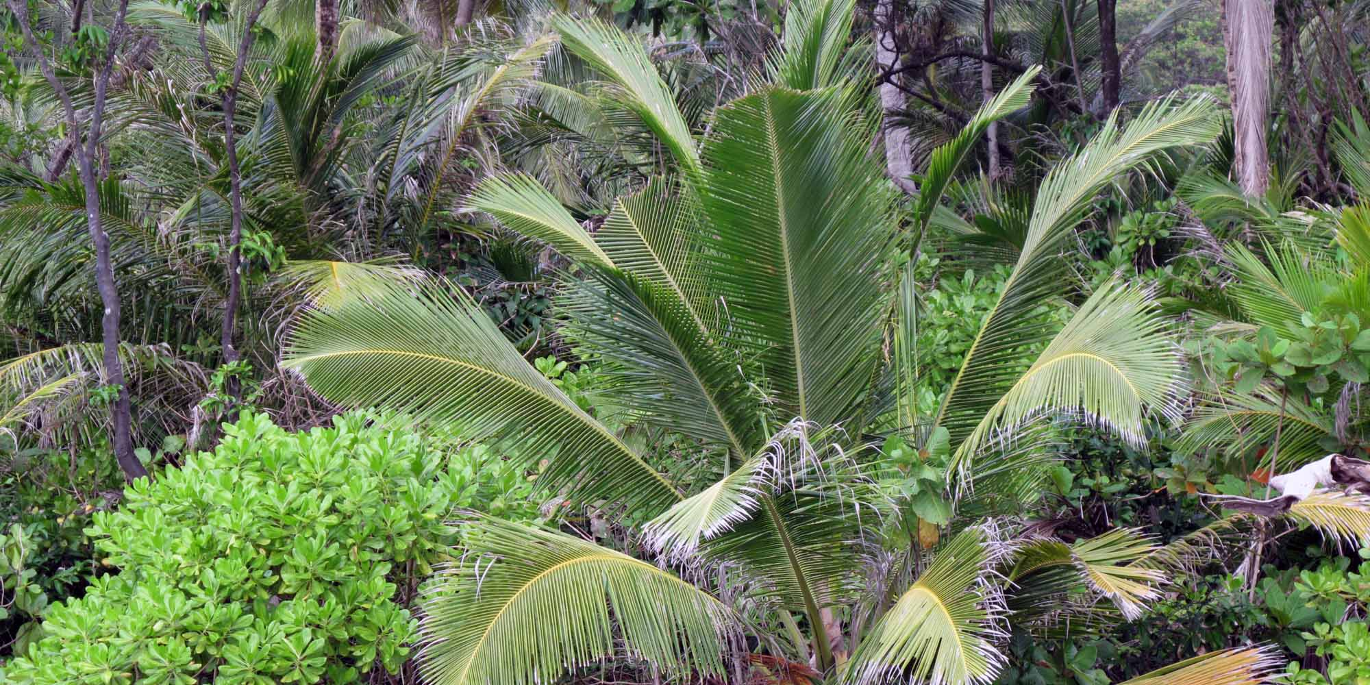 phuket-2010-palm.jpg