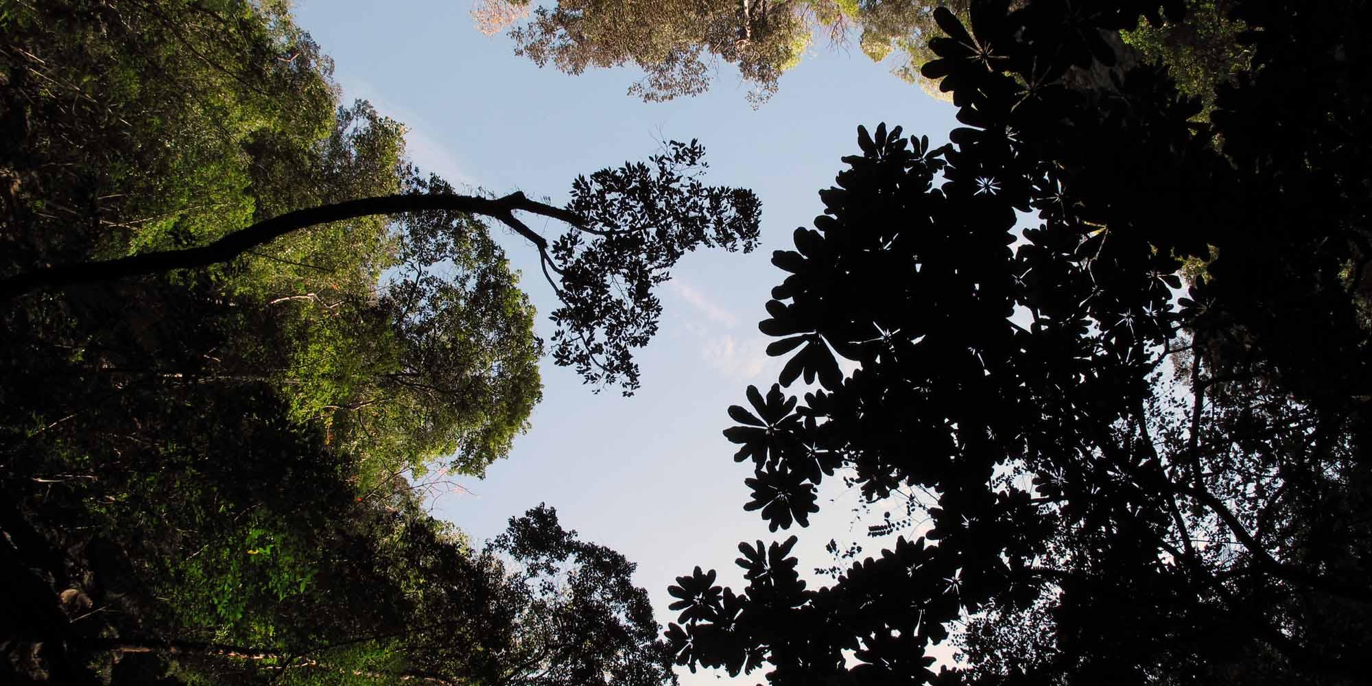 phuket-2010-trees.jpg