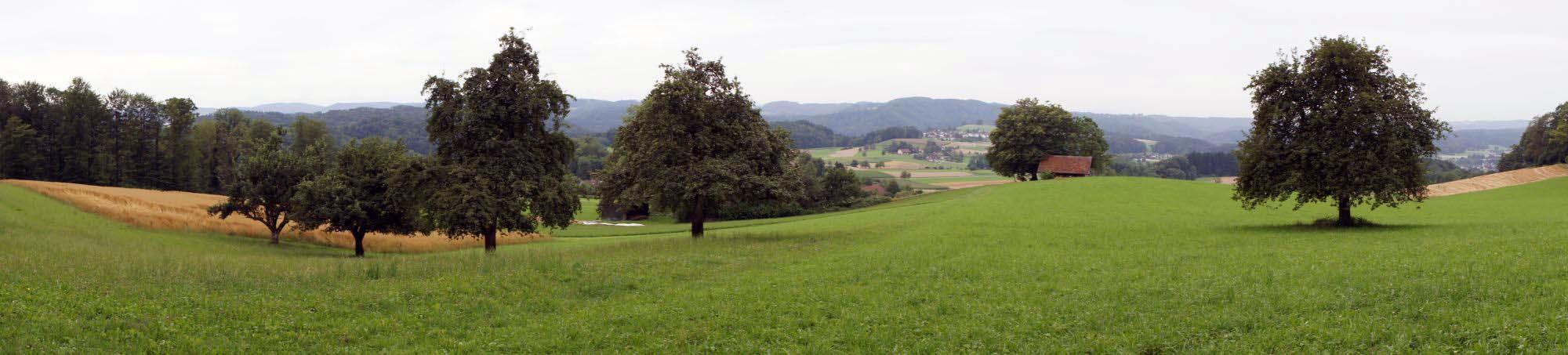 iberg-panorama-2010-005-sm.jpg
