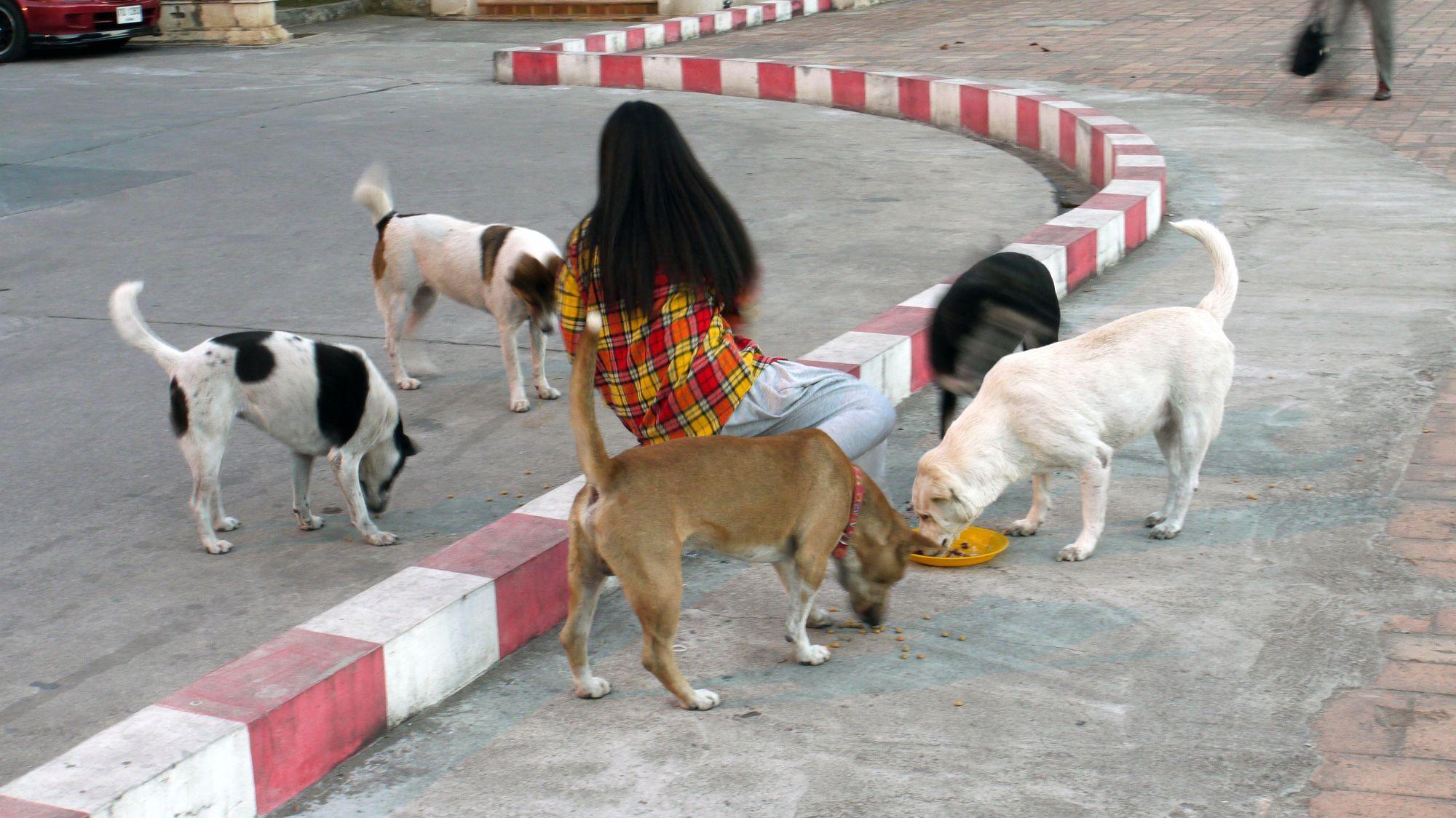 thai-2012-187.JPG